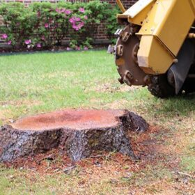 Tree Removal, Trimming and Stump Grinding
