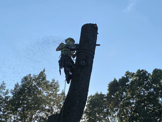 Tree Removal Madison WI