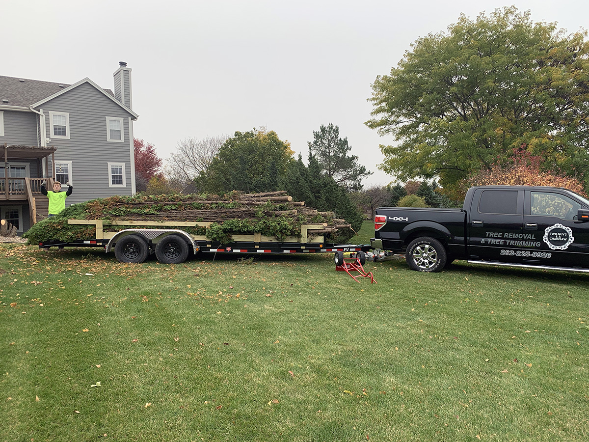 tree removal madison