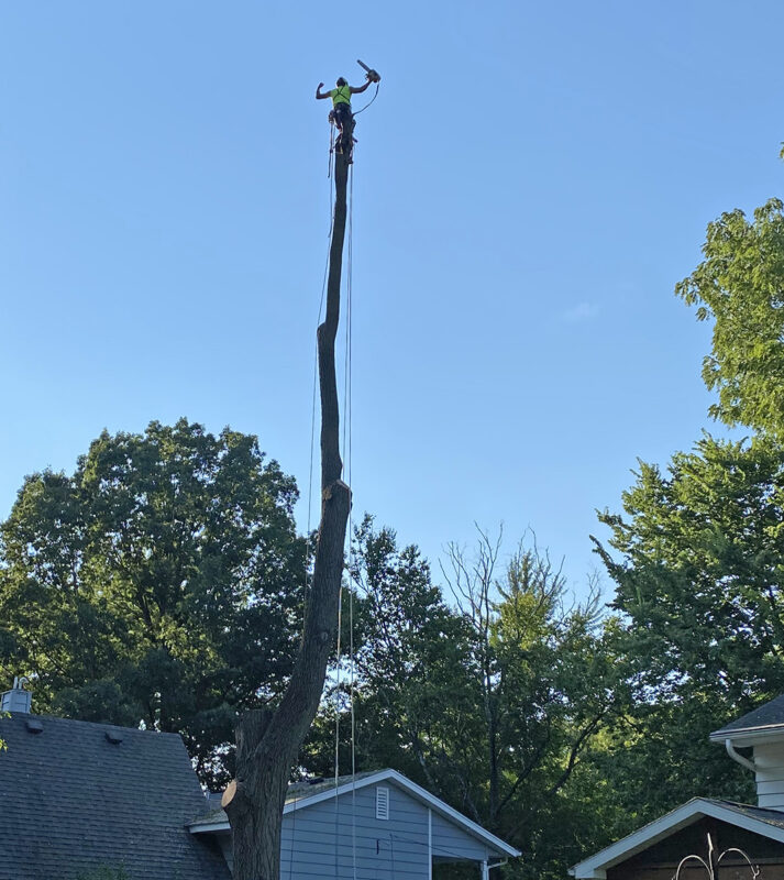 Tree Removal in Madison WI